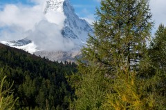 Matterhorn and Tree || Zermatt, Switzerland