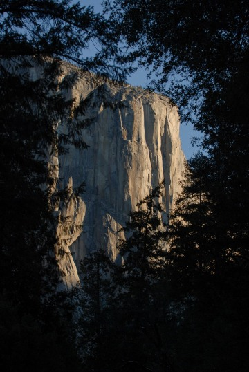 El Capitan Framed by Trees || Yosemite NP