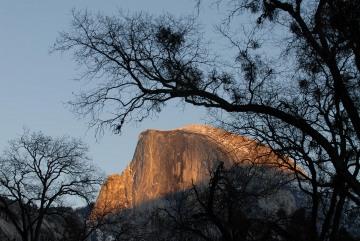 Half Dome Framed through Trees || Yosemite NP
