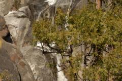 Abstract Falls || Yosemite NP